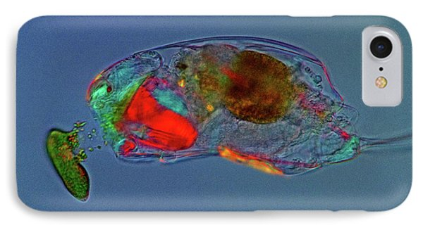 Trichocerca Rotifer IPhone Case