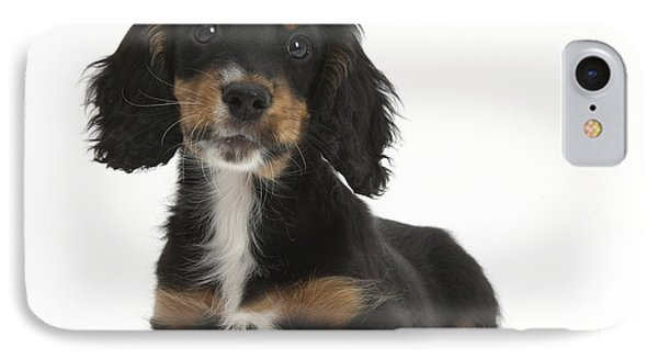 Tricolor Working Cocker Spaniel Puppy IPhone Case