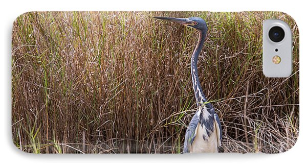 IPhone Case featuring the photograph Tricolored Heron Peeping Over The Rushes by John M Bailey