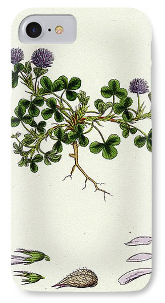 Trifolium Resupinatum Reversed-flowered Trefoil IPhone Case