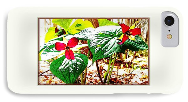Trillium In The Woods IPhone Case by Joy Nichols