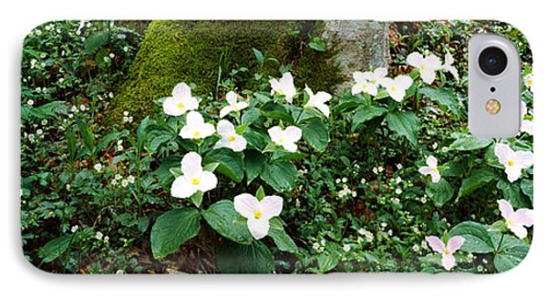 Trillium Wildflowers On Plants, Chimney IPhone Case by Panoramic Images