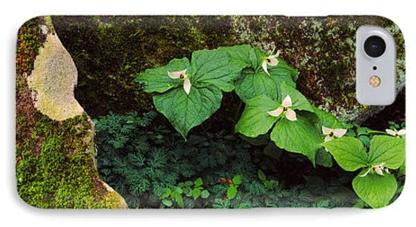 Trillium Wildflowers On Plants, Great IPhone Case by Panoramic Images