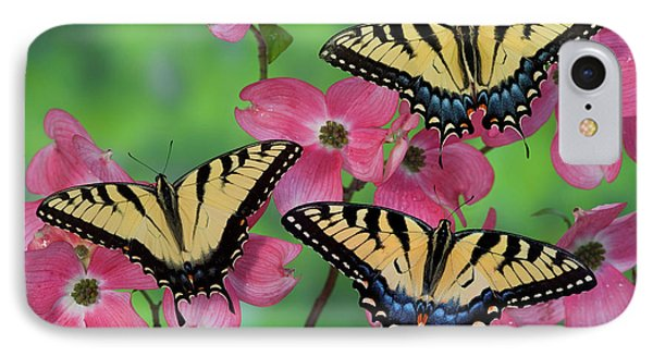 Trio Of Eastern Tiger Swallowtail IPhone Case by Darrell Gulin