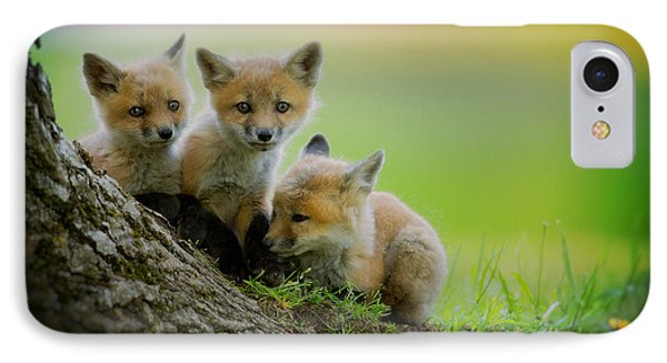 Trio Of Fox Kits Phone Case by Everet Regal