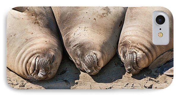 Trio Of Sleeping Northern Elephant Seals Mirounga Angustirostris At The Piedras Blancas Beach Phone Case by Jamie Pham