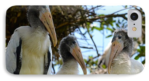 Triplet Wood Stork Nestlings IPhone Case by Richard Bryce and Family