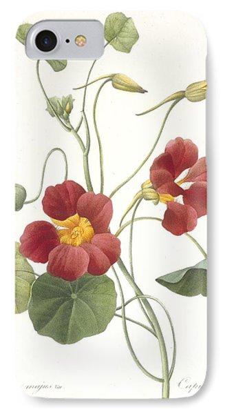 Tropaeolum Majus Garden Nasturtium IPhone Case