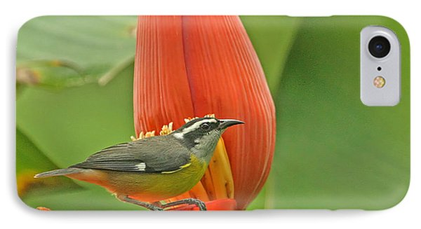 IPhone Case featuring the photograph Tropical Birds - Bananaquit by Peggy Collins