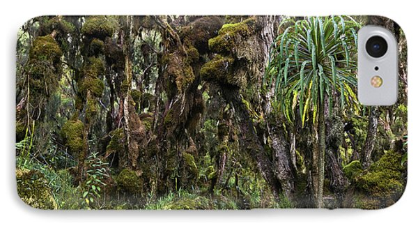 Tropical Mountain Forest, Rwenzori IPhone Case by Martin Zwick