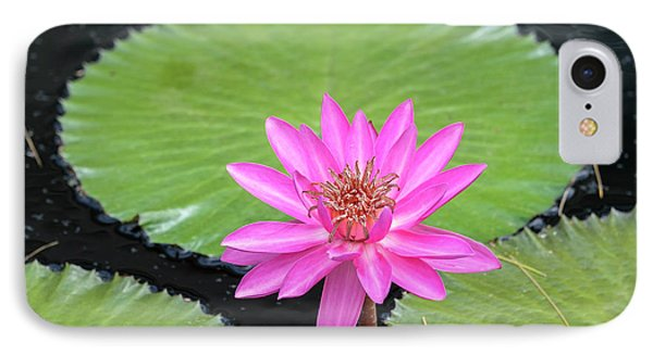 Tropical Night-flowering Waterlily, Usa IPhone Case