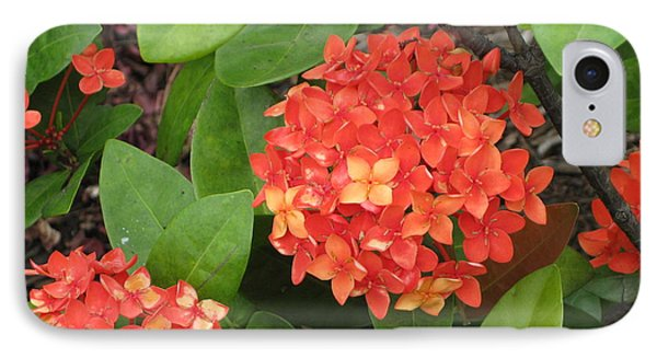 IPhone Case featuring the photograph Tropical Orange Flower by Judy Palkimas