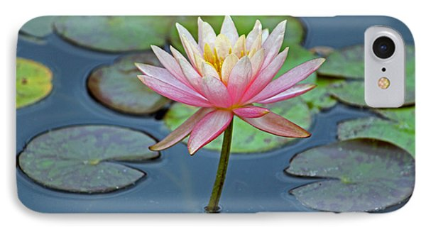 Tropical Pink Lily IPhone Case by Cynthia Guinn