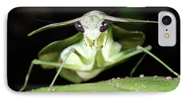 Tropical Shield Mantis IPhone Case by Dr Morley Read