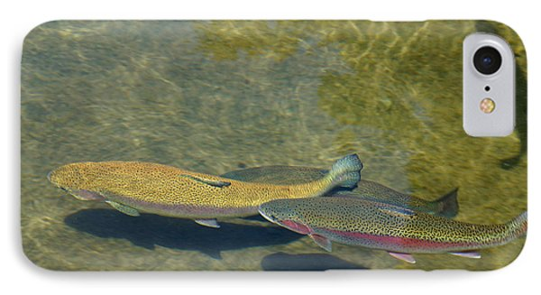 Trout Art Prints Wild Game Sports Fishing IPhone Case