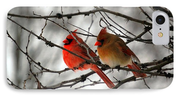 IPhone Case featuring the photograph True Love Cardinal by Peggy Franz