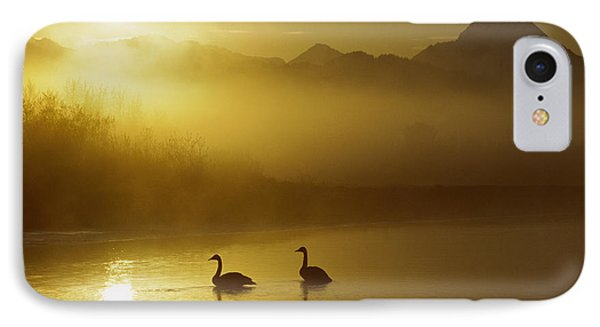 Trumpeter Swan Pair At Sunset Phone Case by Michael Quinton