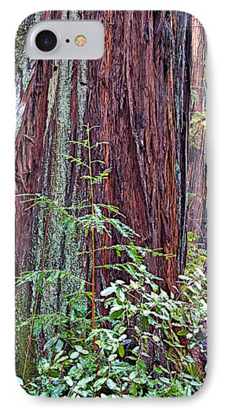 Trunk Of Coastal Redwood In Armstrong Redwoods State Preserve Near Guerneville-ca IPhone Case