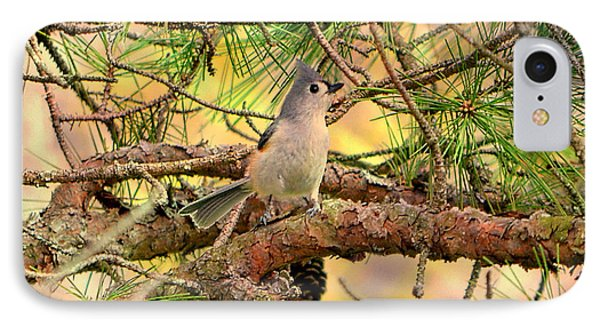 Tufted Titmouse IPhone Case by Deena Stoddard