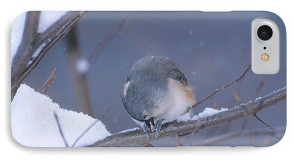 Tufted Titmouse Eating Seeds IPhone Case by Paul J. Fusco