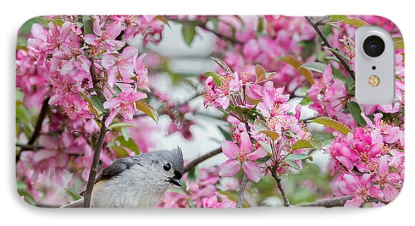 Tufted Titmouse In A Pear Tree Square IPhone 7 Case by Bill Wakeley