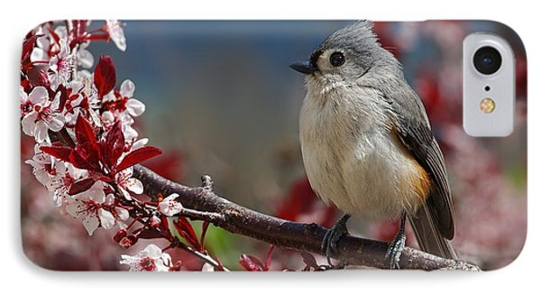 Tufted Titmouse On Ornamental Plum Blossoms Phone Case by Lara Ellis