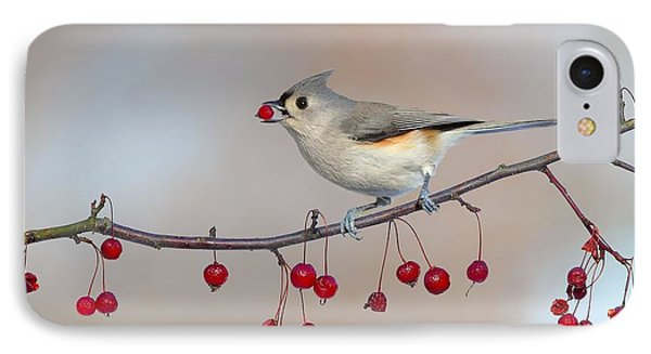 Tufted Titmouse With Red Berry IPhone Case by Daniel Behm