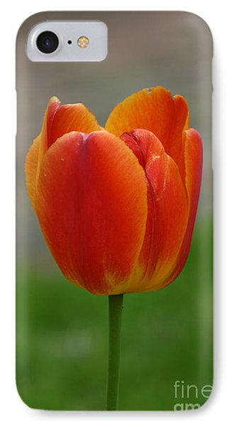 Tulip Collection Photo 8 IPhone Case