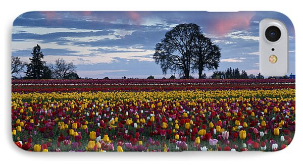 Tulip Field's Last Colors IPhone Case by Wes and Dotty Weber