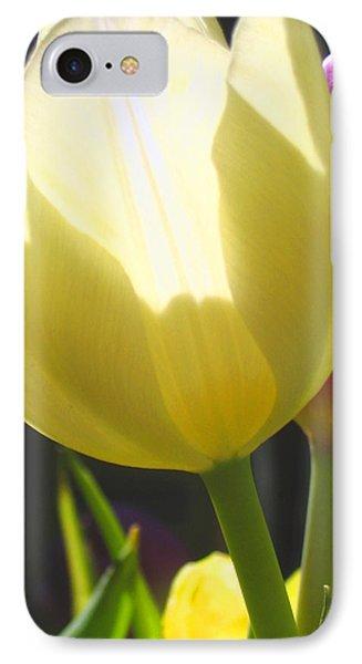 Tulip In Bright Sunlight IPhone Case