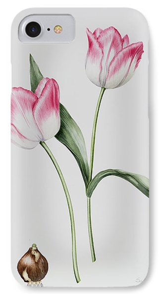 Tulip Meissner Porcellan With Bulb  IPhone Case by Sally Crosthwaite