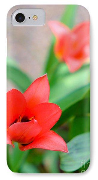 Tulip Of Dream IPhone Case