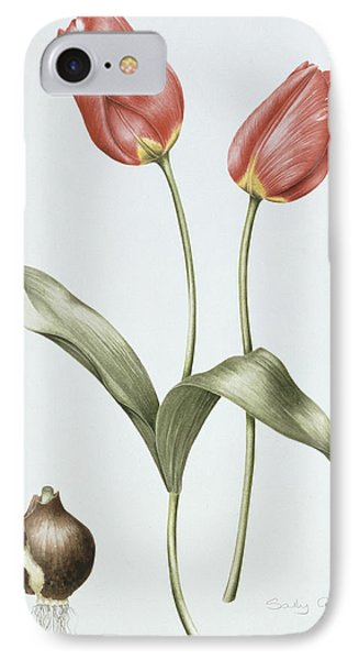 Tulip Red Darwin IPhone Case by Sally Crosthwaite