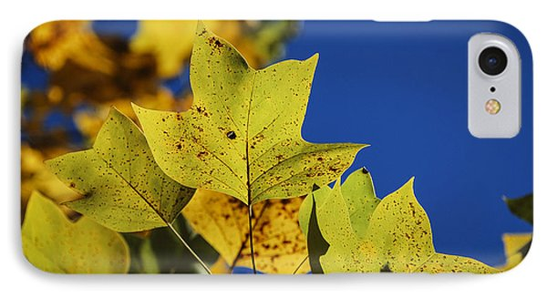 IPhone Case featuring the photograph Tulip Tree In Autumn by Phil Abrams