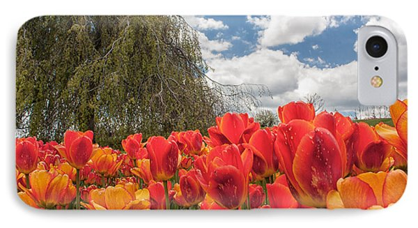 Tulips IPhone Case by Brian Caldwell