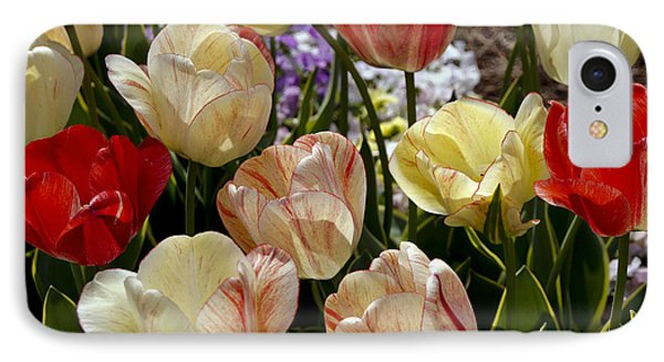 Tulips IPhone Case by Debra Crank