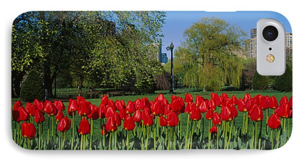 Tulips In A Garden, Boston Public IPhone Case by Panoramic Images