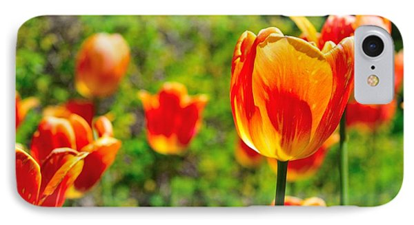 IPhone Case featuring the photograph Tulips by Joe  Ng
