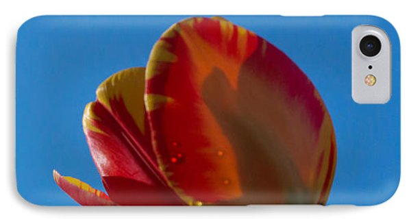 Tulips On Blue IPhone Case
