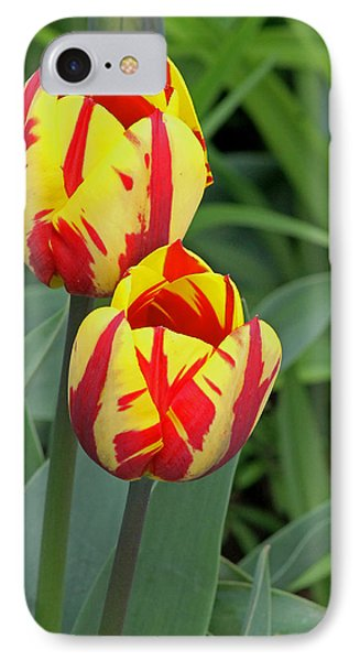Tulips IPhone Case by Tony Murtagh