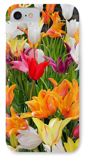 IPhone Case featuring the photograph Tulips Tulips by Haleh Mahbod
