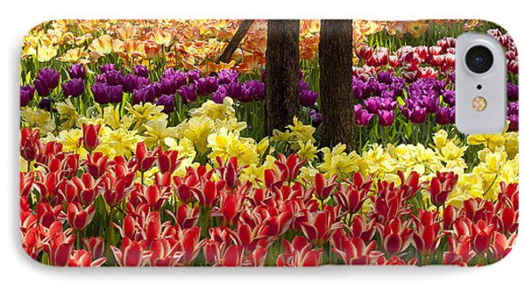 Tulips Tulips Tulips IPhone Case by Robert Camp