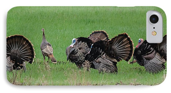 Turkey Mating Ritual IPhone Case by Cheryl Baxter