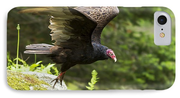 Turkey Vulture IPhone Case
