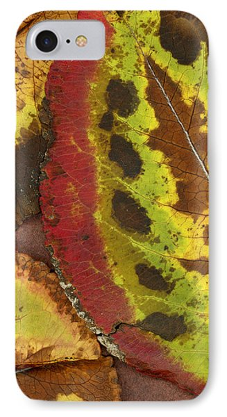 Turning Leaves 3 Phone Case by Stephen Anderson