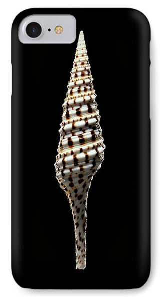 Turrid Sea Snail Shell IPhone Case by Gilles Mermet