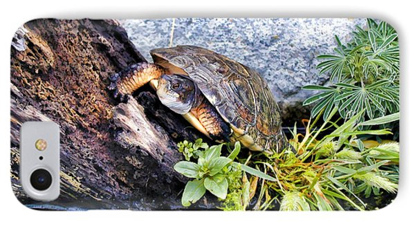 IPhone Case featuring the photograph Turtle 1 by Dawn Eshelman