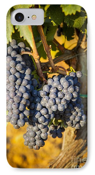 Tuscan Vineyard IPhone Case by Brian Jannsen