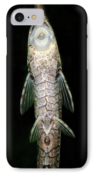 Twig Catfish Or Stick Catfish IPhone 7 Case by Nigel Downer