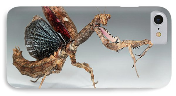 Twig Mantis (popa Spurca) IPhone Case by Tomasz Litwin